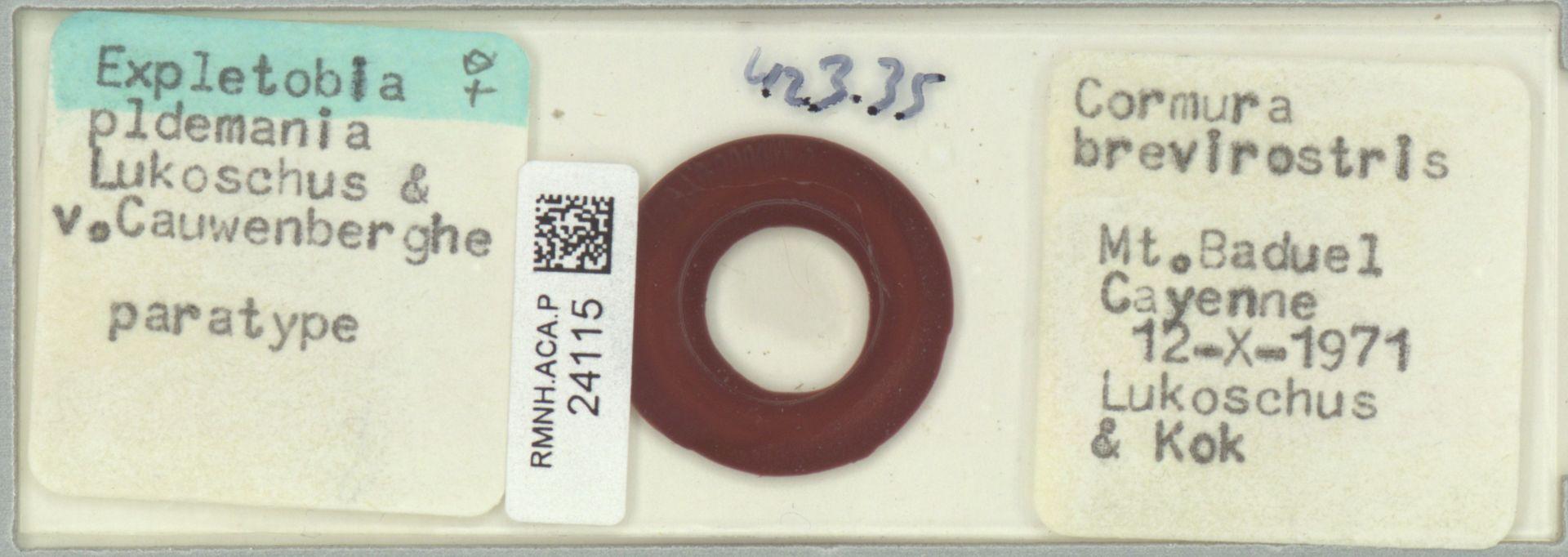 RMNH.ACA.P.24115 | Expletobia oldemania Lukoschus & v. Cauwenberghe