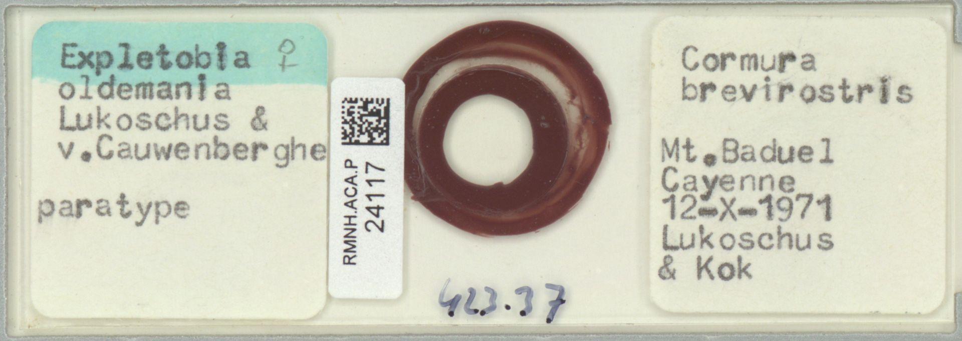 RMNH.ACA.P.24117 | Expletobia oldemania Lukoschus & v.Cauwenberghe