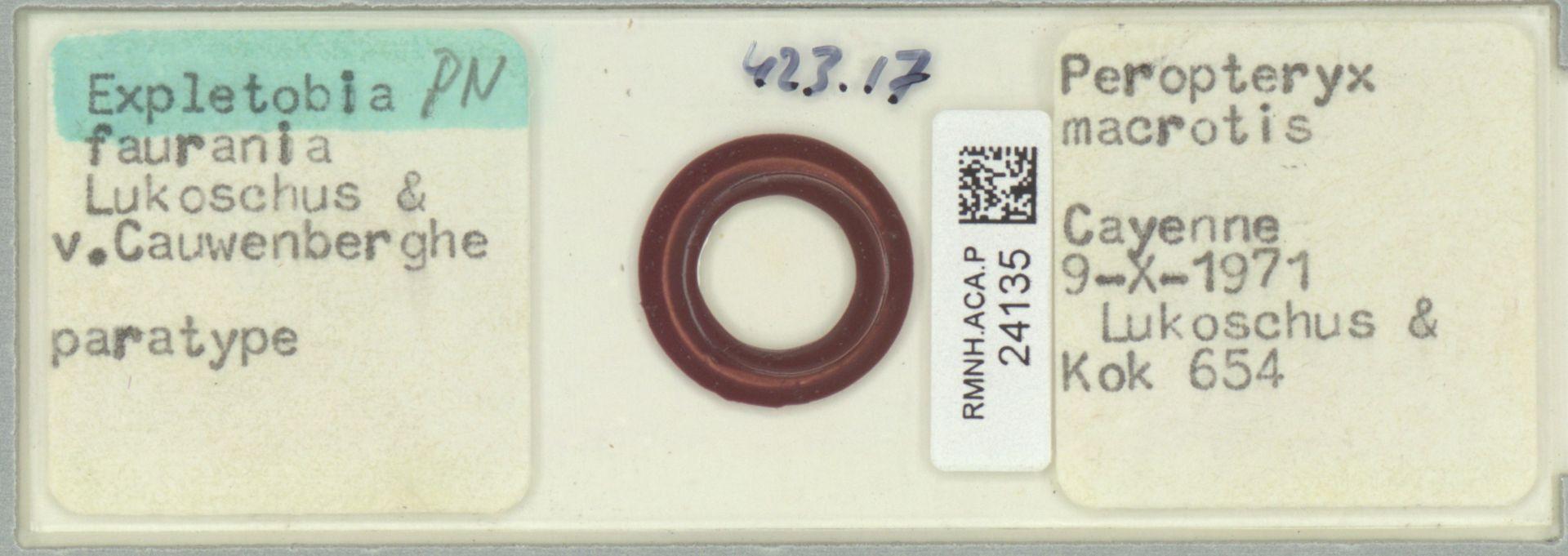RMNH.ACA.P.24135 | Expletobia faurania Lukoschus & v. Cauwenberghe