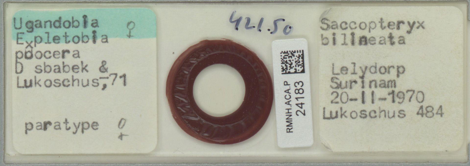 RMNH.ACA.P.24183 | Ugandobia (Expletobia) procera Dusbabek & Lukoschus 71