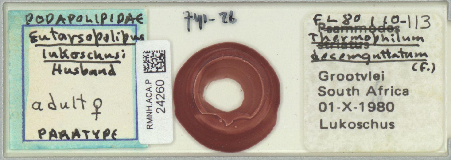 RMNH.ACA.P.24260 | Eutarsopolipus lukoschusi Husband