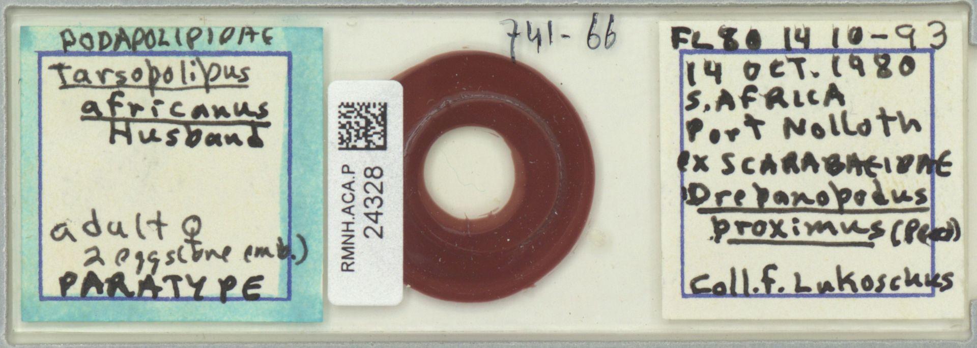 RMNH.ACA.P.24328 | Tarsopolipus africanus Husband
