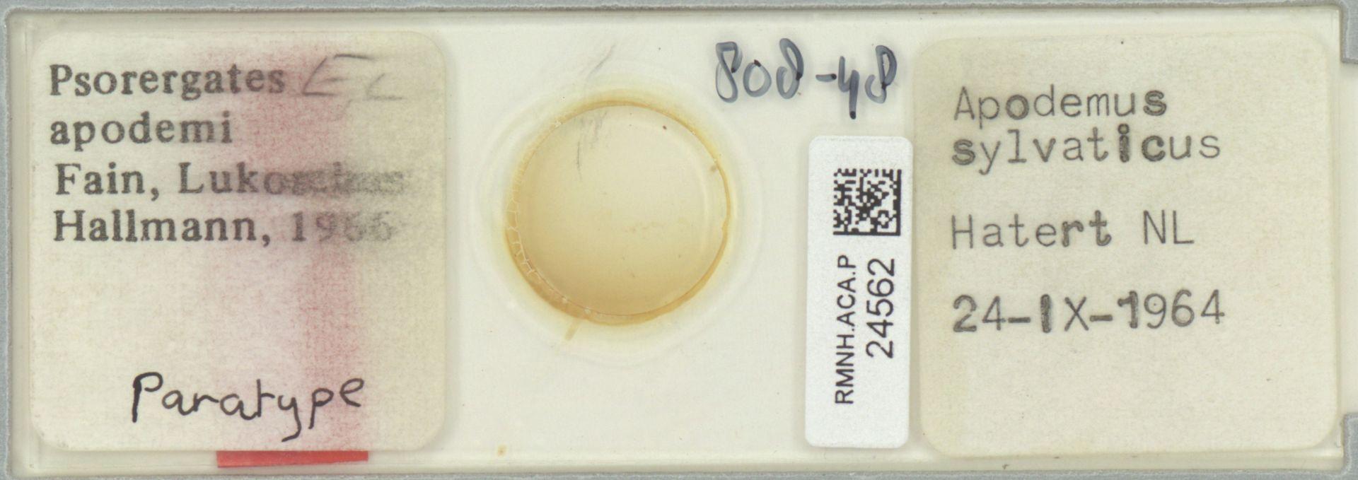 RMNH.ACA.P.24562 | Psorergates apodemi Fain, Lukoschus, Hallmann, 1966