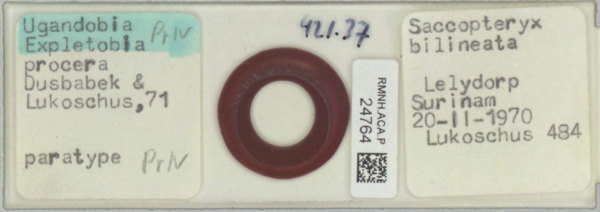RMNH.ACA.P.24764 | Ugandobia (Expletobia) procera Dusbabek & Lukoschus, 71