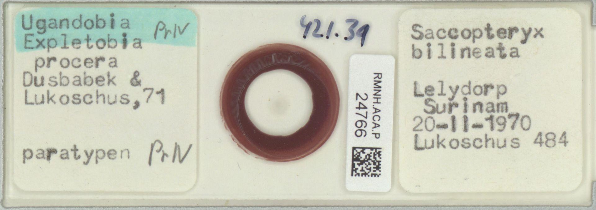 RMNH.ACA.P.24766 | Ugandobia (Expletobia) procera Dusbabek & Lukoschus, 71