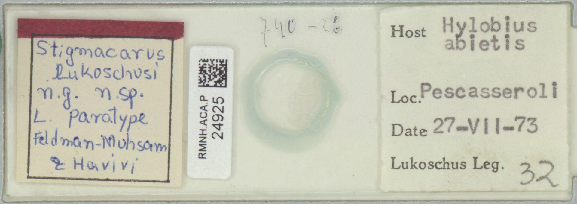 RMNH.ACA.P.24925 | Stigmacarus lukoschusi Feldman-Muhsam & Havivi