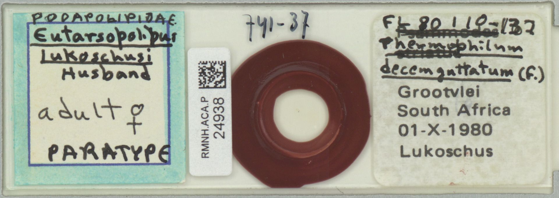 RMNH.ACA.P.24938 | Eutarsopolipus lukoschi Husband