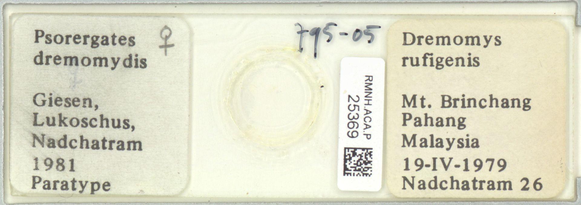 RMNH.ACA.P.25369 | Psorergates dremomydis Giesen, Lukoschus, Nadchatram 1981