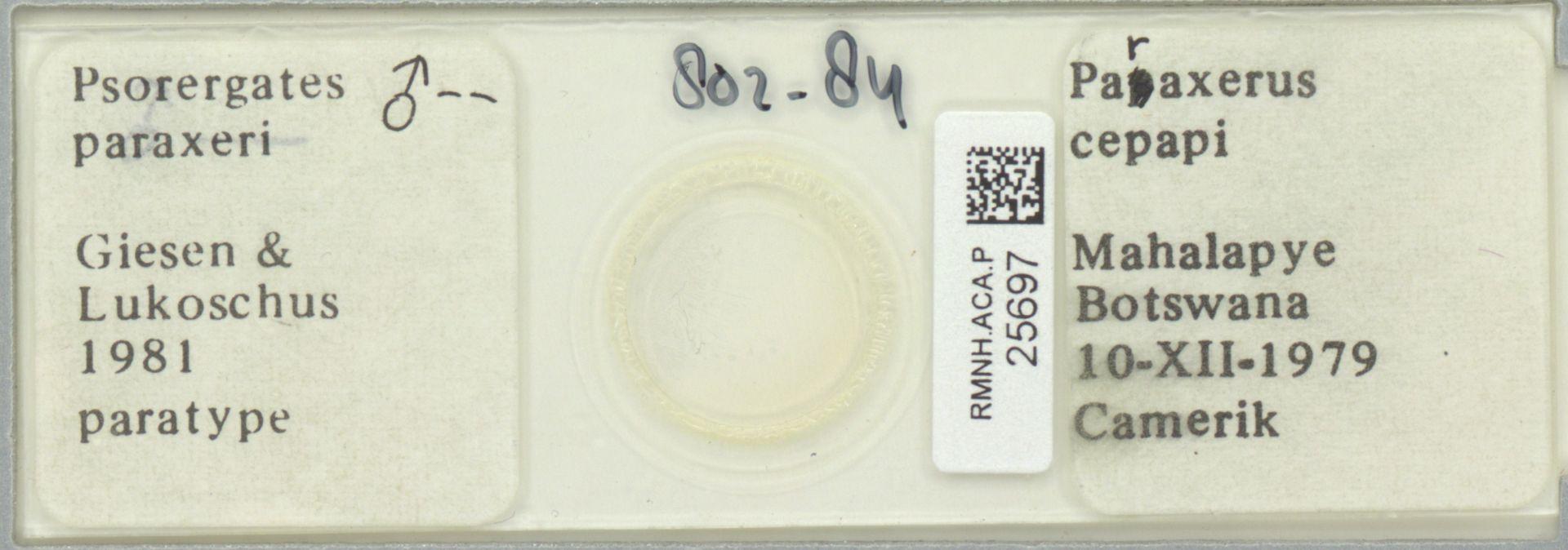 RMNH.ACA.P.25697 | Psorergates paraxeri Giesen & Lukoschus 1981