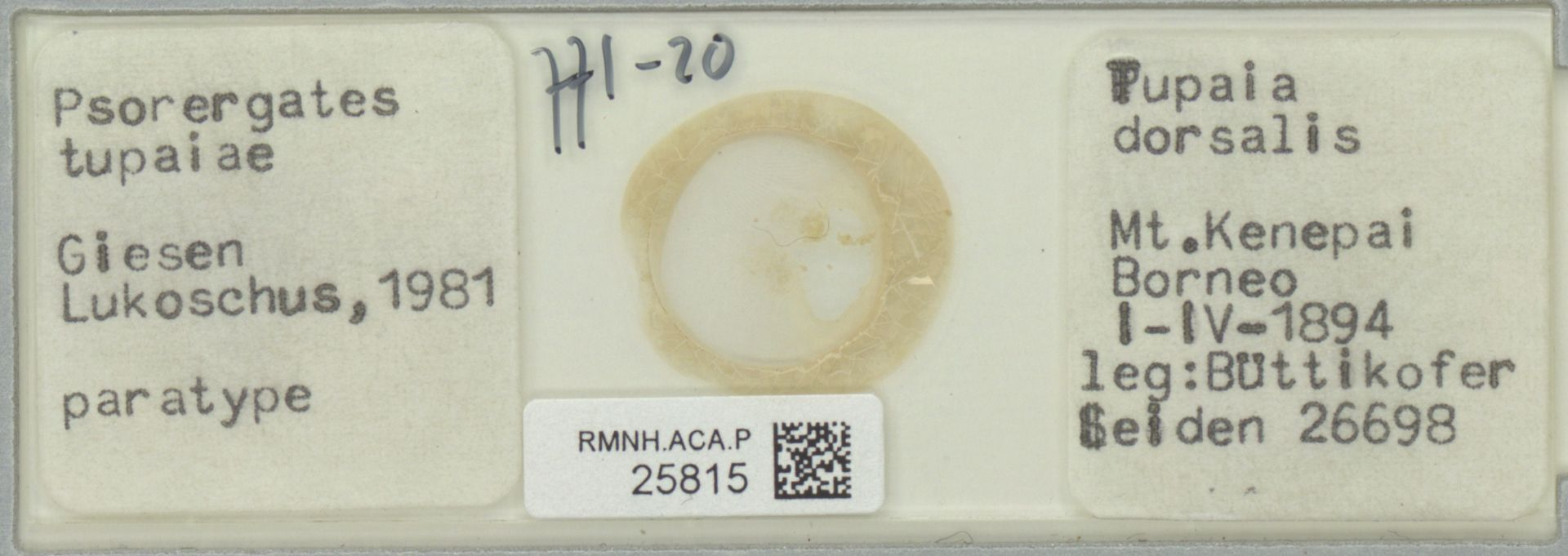 RMNH.ACA.P.25815 | Psorergates tupaiea Giesen, Lukoschus 1981