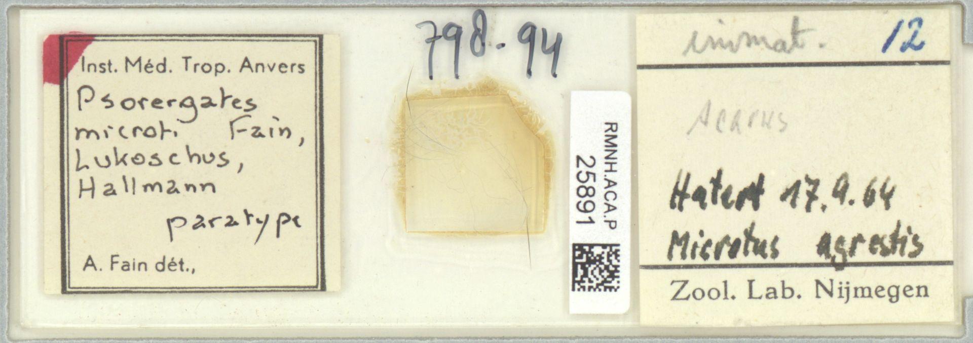 RMNH.ACA.P.25891 | Psorergates microti Fain, Lukoschus, Hallmann