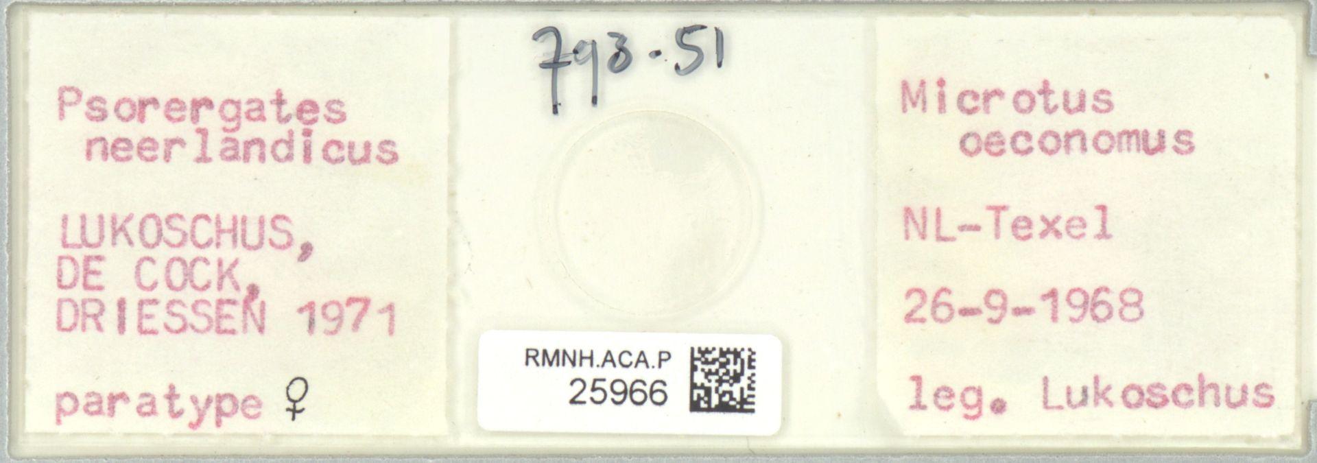RMNH.ACA.P.25966 | Psorergates neerlandicus Lukoschus, de Cock, Driessen 1971