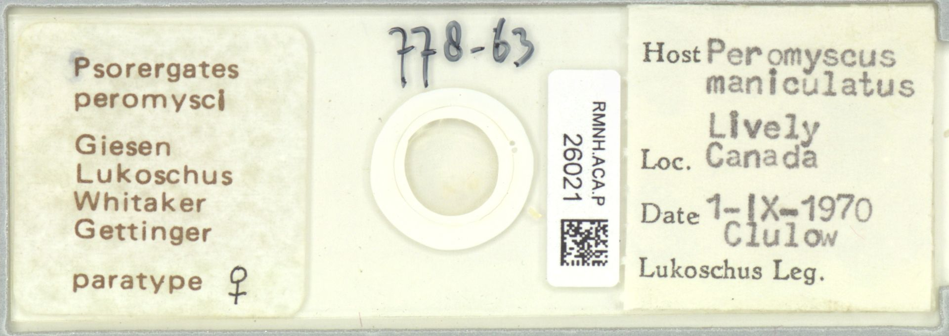 RMNH.ACA.P.26021 | Psorergates peromysci Giesen Lukoschus Whitaker Gettinger