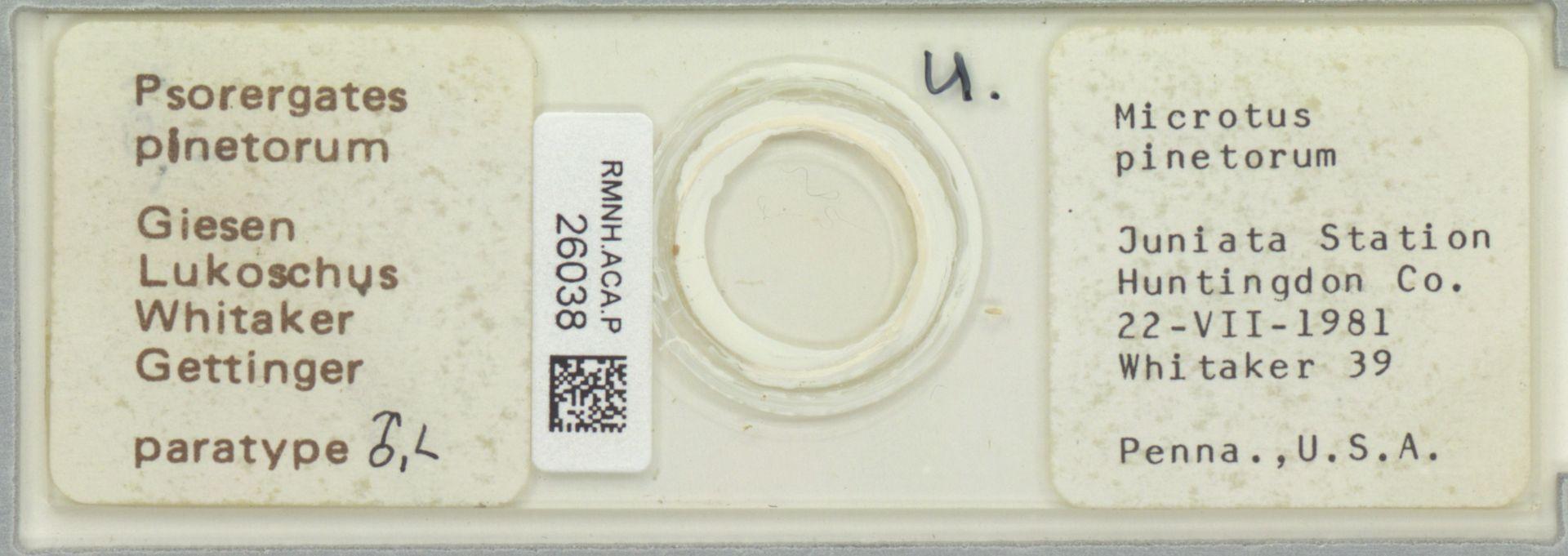 RMNH.ACA.P.26038   Psorergates pinetorum Giesen Lukoschus Whitaker Gettinger
