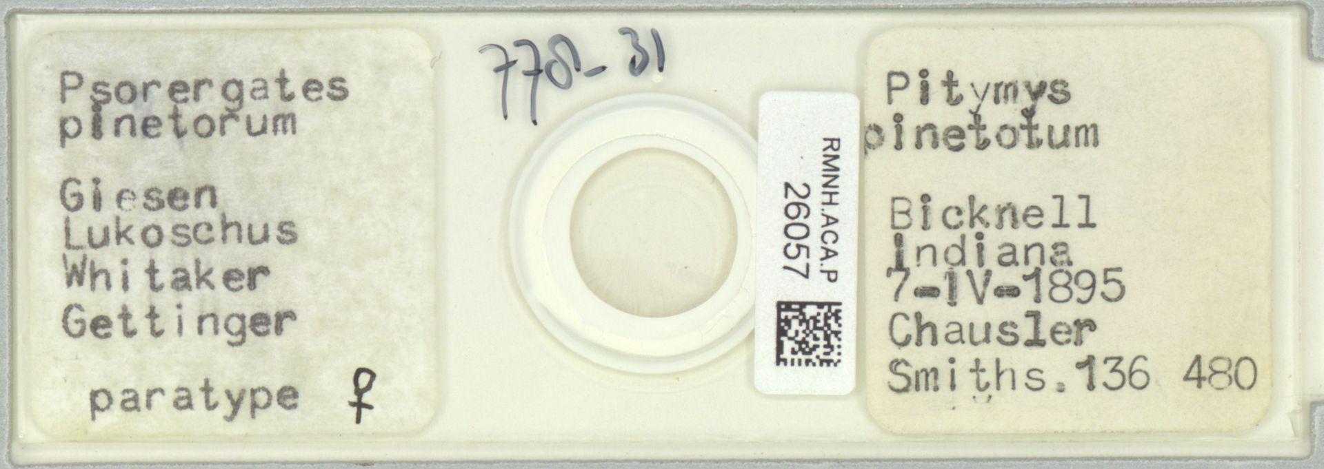 RMNH.ACA.P.26057 | Psorergates pinetorum Giesen Lukoschus Whitaker Gettinger