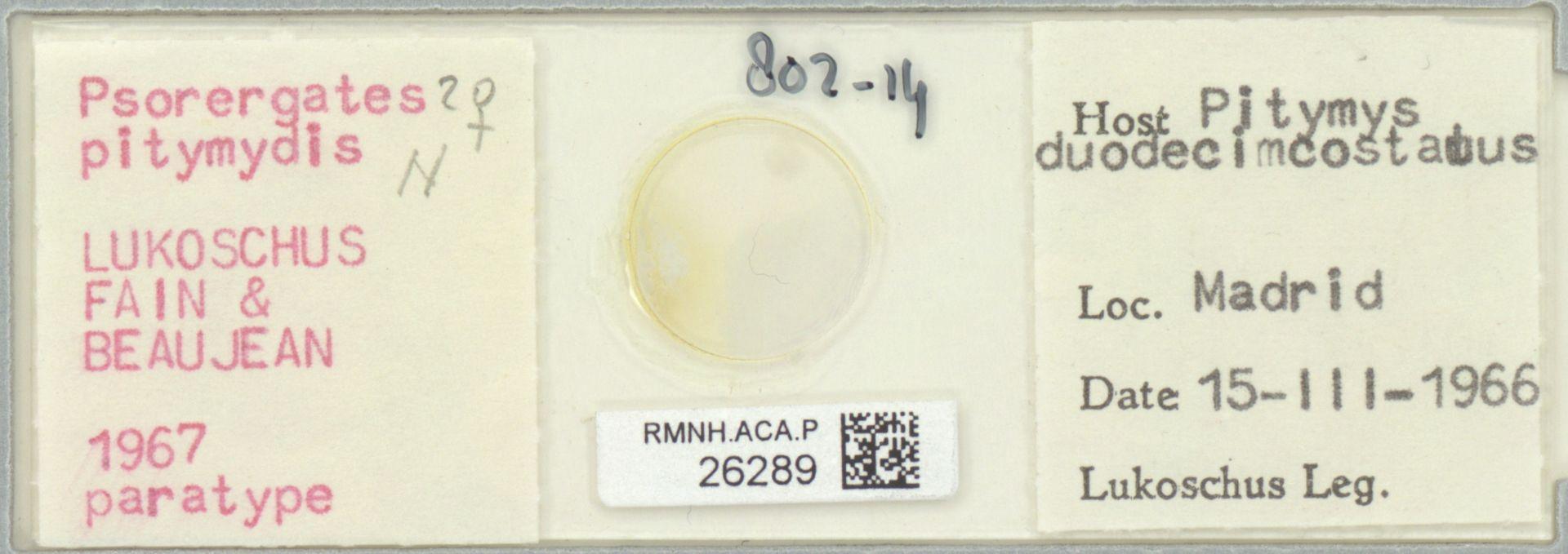 RMNH.ACA.P.26289   Psorergates pitymydis Lukoschus, Fain & Beaujan 1967