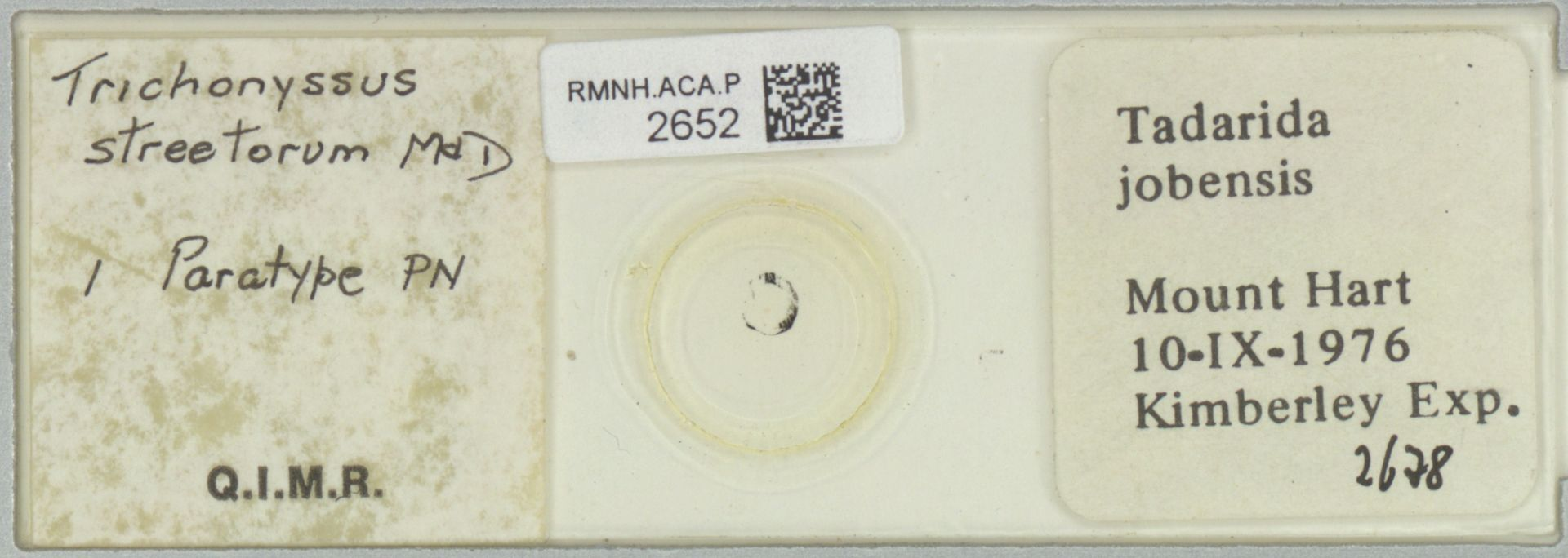 RMNH.ACA.P.2652 | Trichonyssus streetorum Micherdzinski & Domrow, 1985