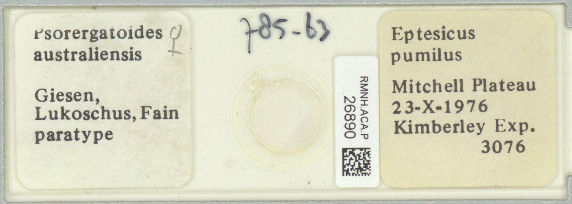 RMNH.ACA.P.26890   Psorergatoides australiensis Giesen, Lukoschus, Fain
