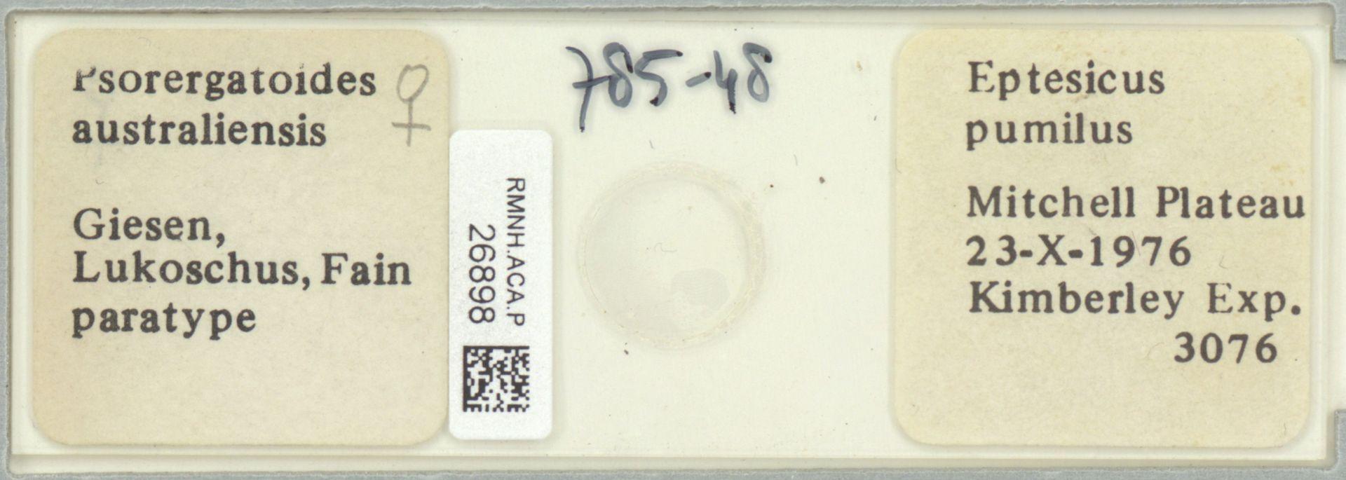RMNH.ACA.P.26898   Psorergatoides australiensis Giesen, Lukoschus, Fain