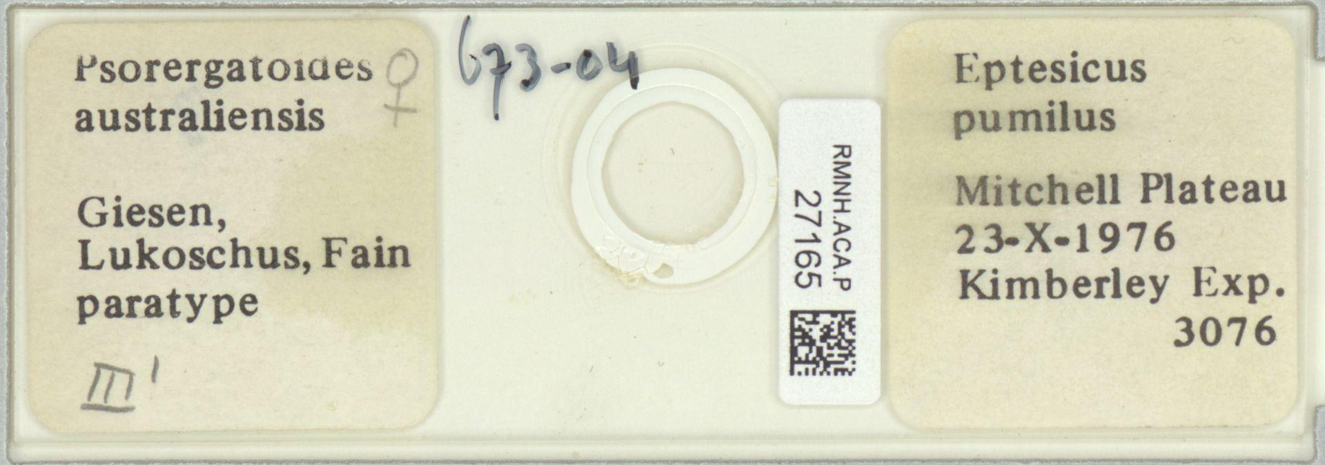RMNH.ACA.P.27165 | Psorergatoides australiensis Giesen, Lukoschus, Fain