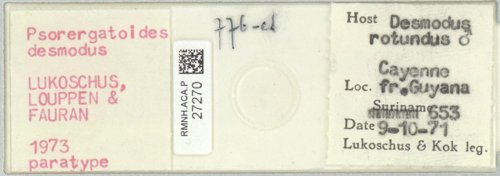 RMNH.ACA.P.27270 | Psorergatoides desmodus Lukoschus, Louppen & Fauran 1973