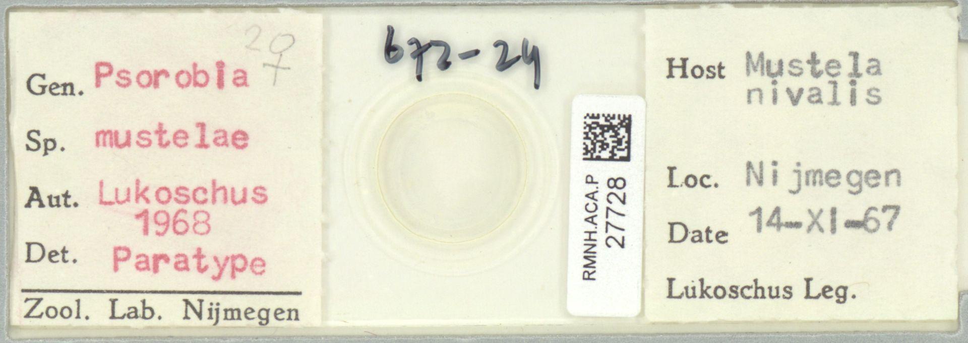 RMNH.ACA.P.27728   Psorobia mustelae Lukoschus 1968