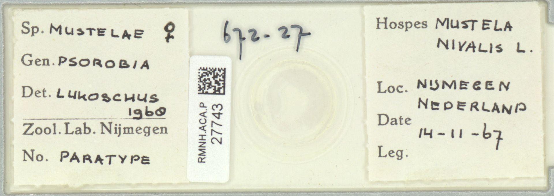 RMNH.ACA.P.27743   Psorobia mustelae Lukoschus 1968