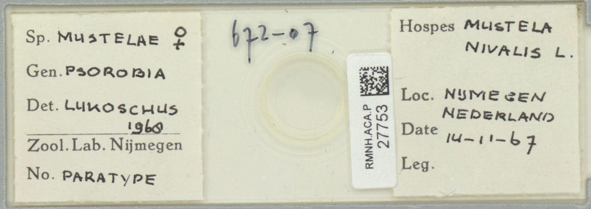 RMNH.ACA.P.27753   Psorobia mustelae Lukoschus 1968