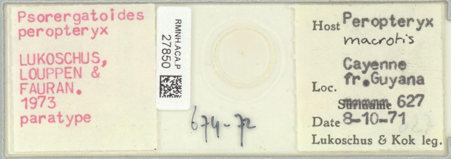 RMNH.ACA.P.27850   Psorergatoides peropteryx Lukoschus, Louppen & Fauran 1973