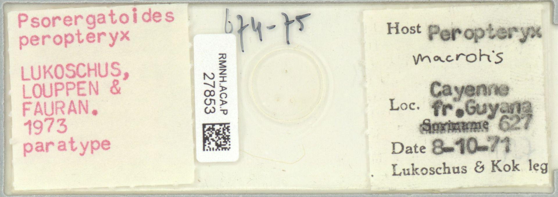 RMNH.ACA.P.27853 | Psorergatoides peropteryx Lukoschus, Louppen & Fauran 1973