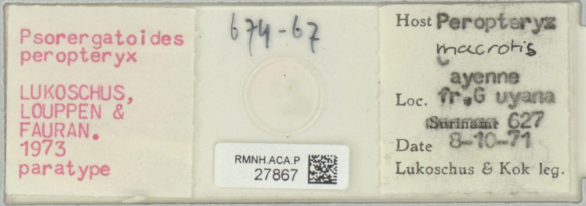 RMNH.ACA.P.27867 | Psorergatoides peropteryx Lukoschus, Louppen & Fauran. 1973