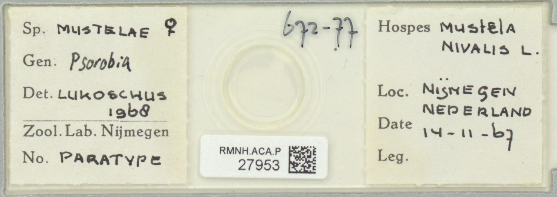 RMNH.ACA.P.27953 | Psorobia mustelae Lukoschus 1968
