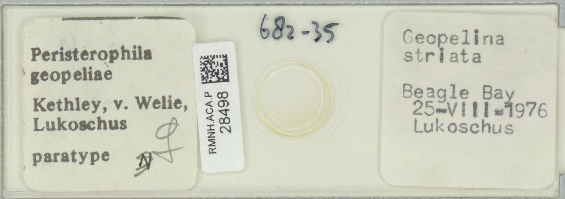 RMNH.ACA.P.28498   Peristerophila geopeliae Kethley, van Welie, Lukoschus