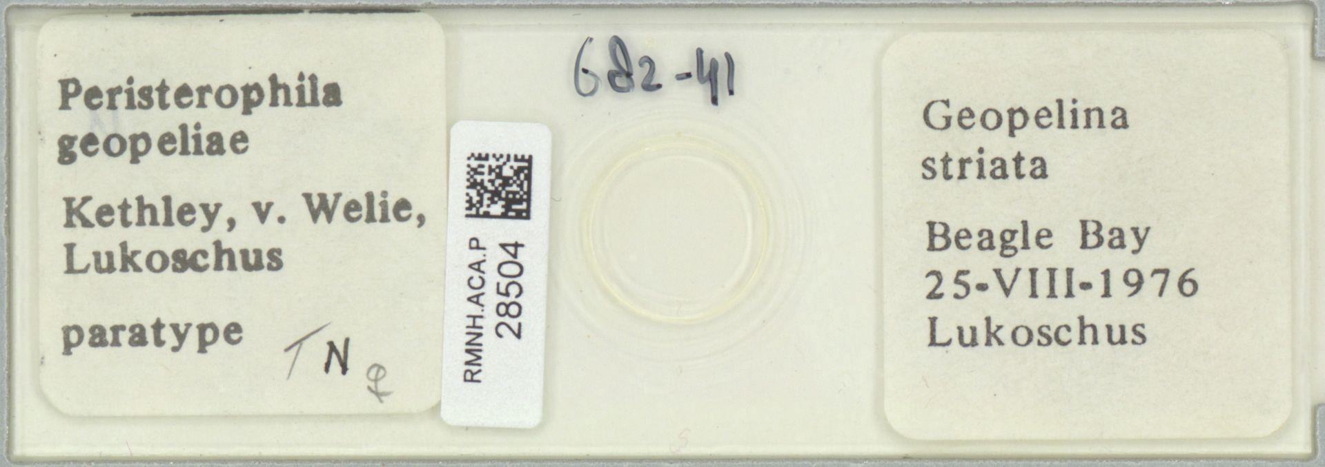 RMNH.ACA.P.28504 | Peristerophila geopeliae Kethley, v. Welie, Lukoschus