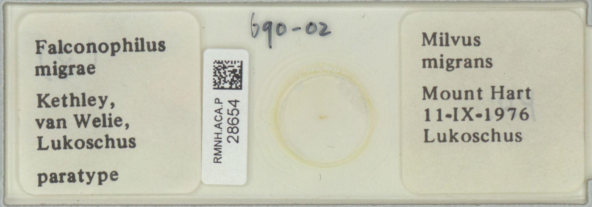 RMNH.ACA.P.28654   Falconophilus migrae Kethley, van Welie, Lukoschus