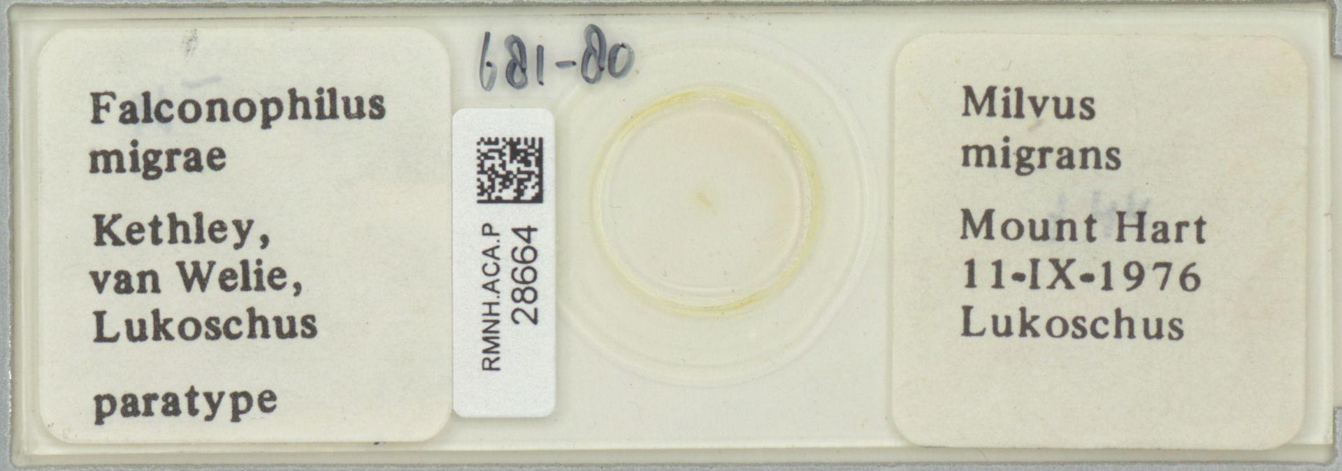RMNH.ACA.P.28664 | Falconophilus migrae Kethley, van Welie, Lukoschus
