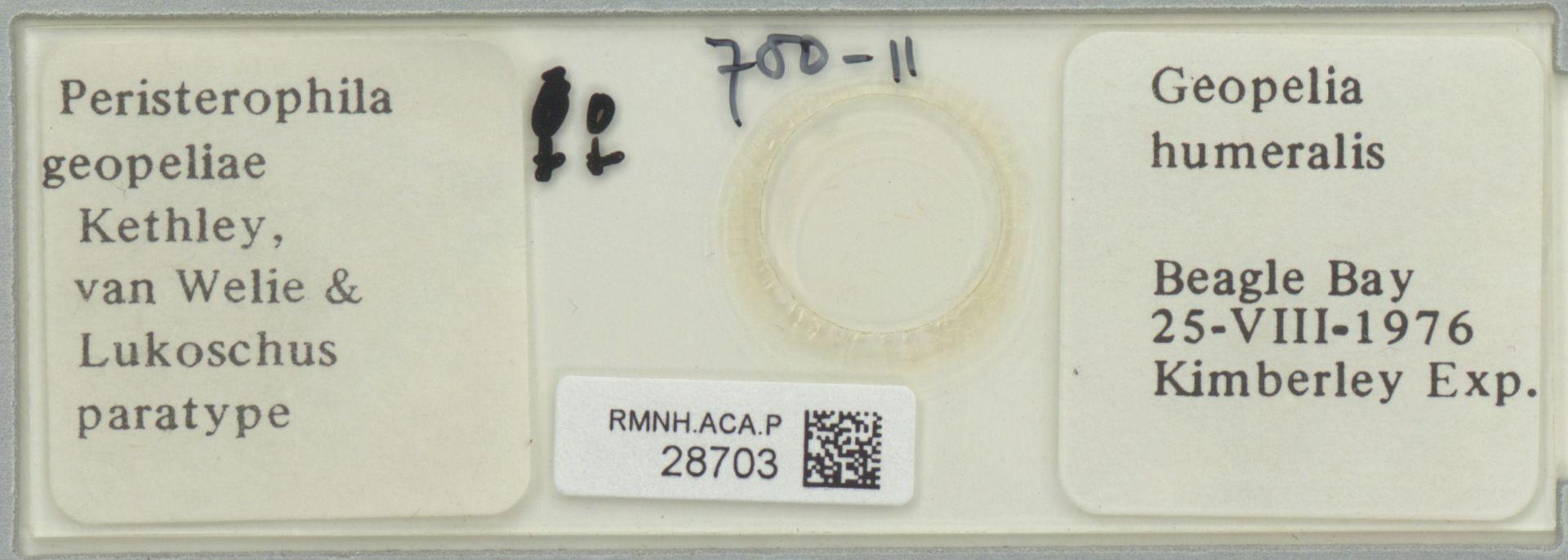 RMNH.ACA.P.28703 | Peristerophila geopeliae Kethley, v. Welie, Lukoschus