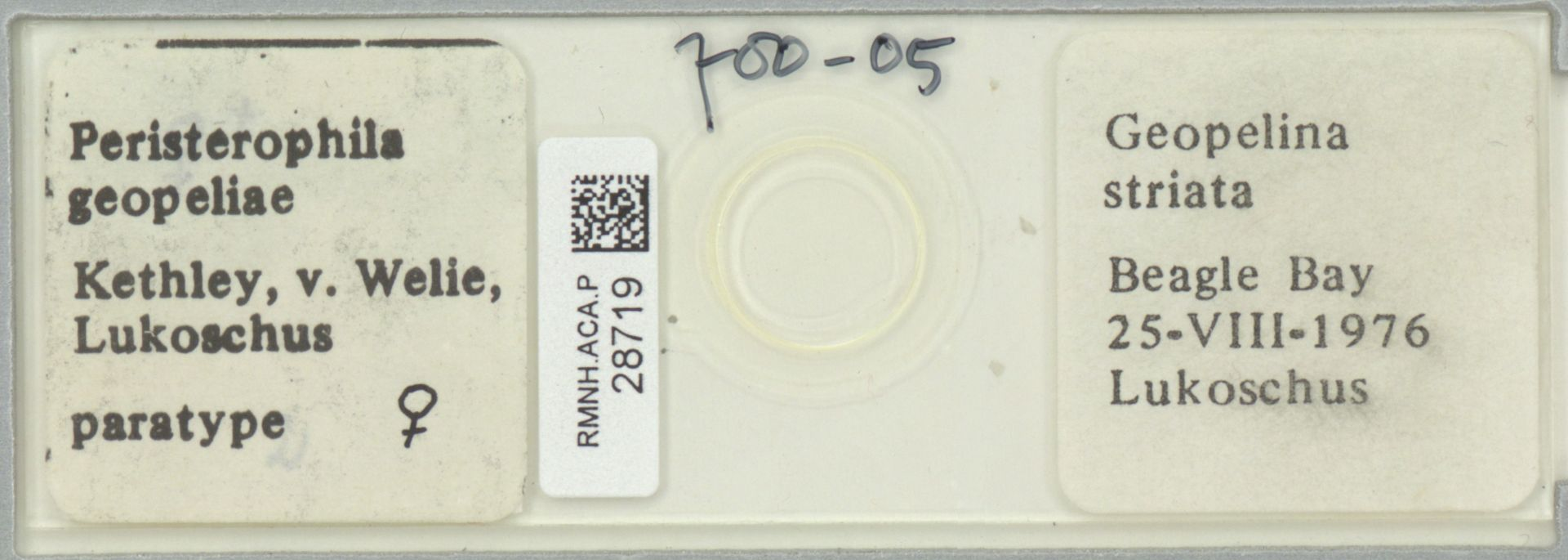 RMNH.ACA.P.28719 | Peristerophila geopeliae Kethley, v. Welie, Lukoschus
