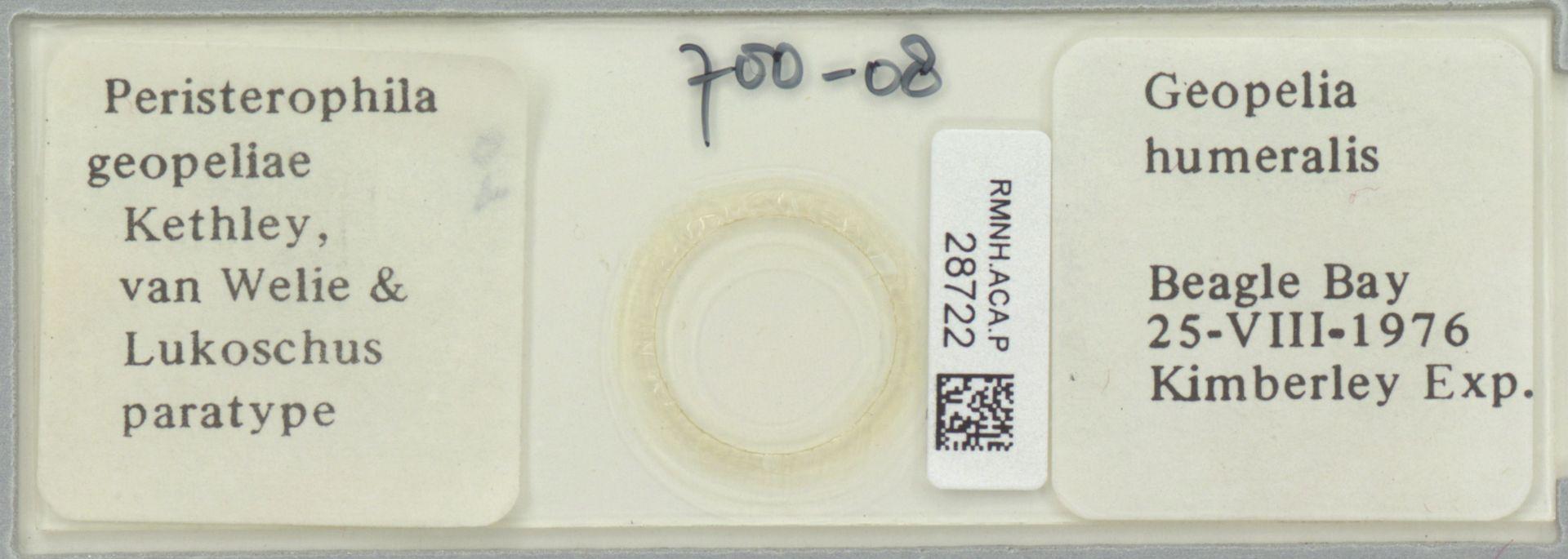 RMNH.ACA.P.28722   Peristerophila geopeliae Kethley, van Welie & Lukoschus