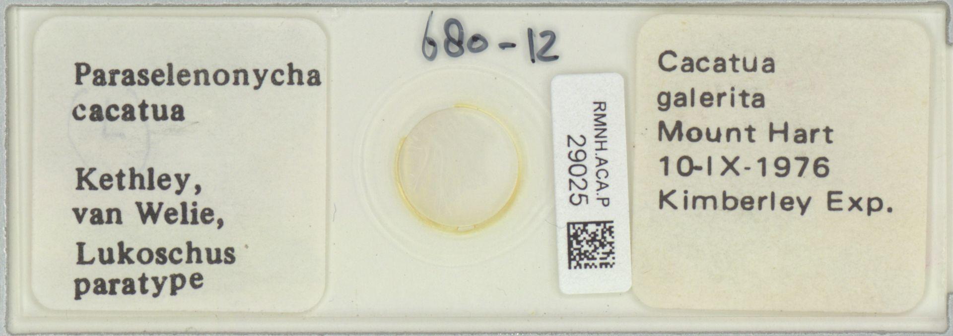 RMNH.ACA.P.29025 | Paraselenonycha cacatua Kethley, van Welie, Lukoschus