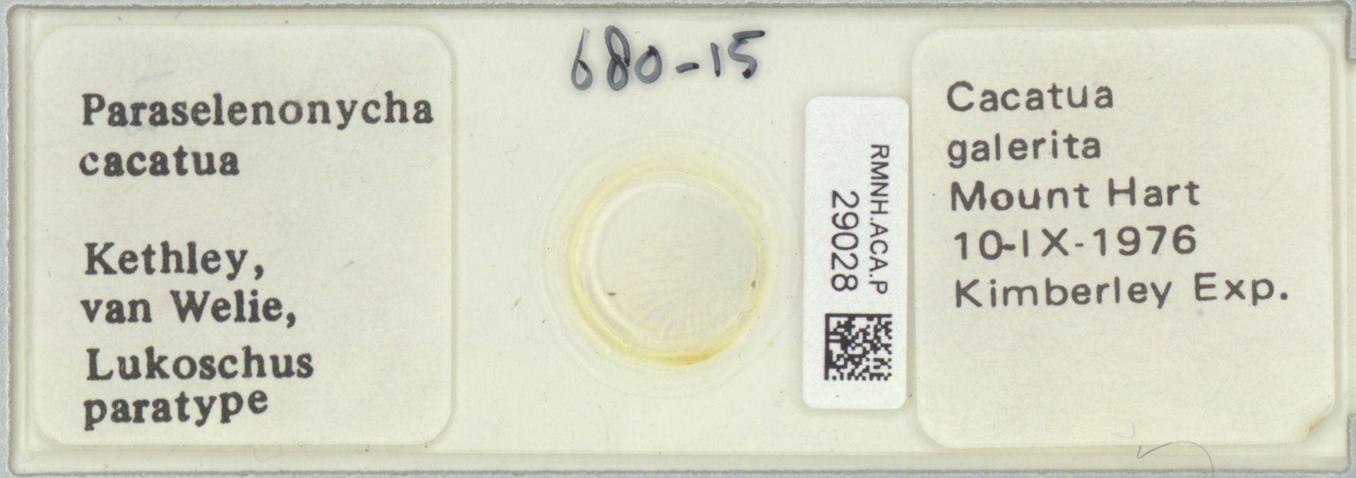 RMNH.ACA.P.29028 | Paraselenonycha cacatua Kethley, van Welie, Lukoschus