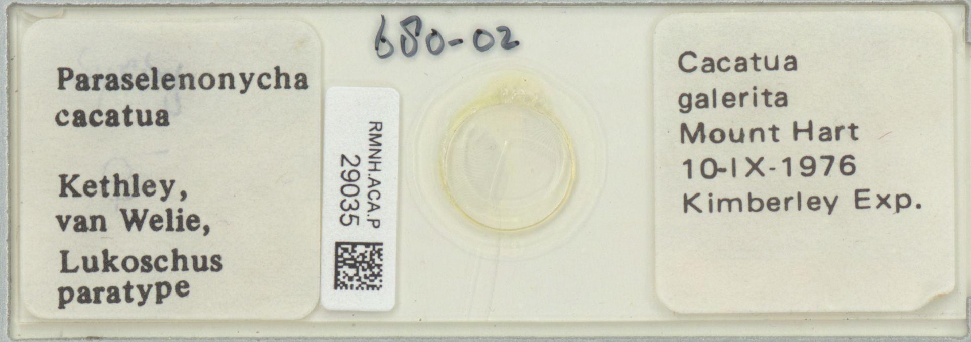 RMNH.ACA.P.29035 | Paraselenonycha cacatua Kethley, van Welie, Lukoschus