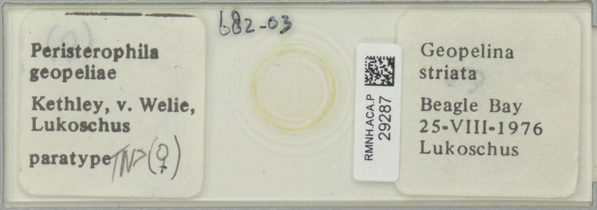 RMNH.ACA.P.29287 | Peristerophila geopeliae Kethley, v. Welie, Lukoschus