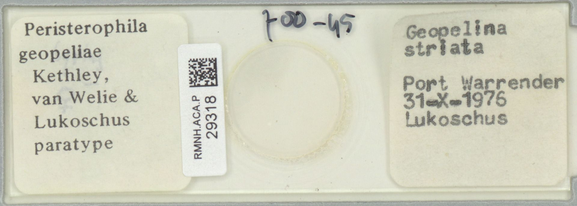 RMNH.ACA.P.29318 | Peristerophila geopeliae Kethley; van Weliy & Lukoschus