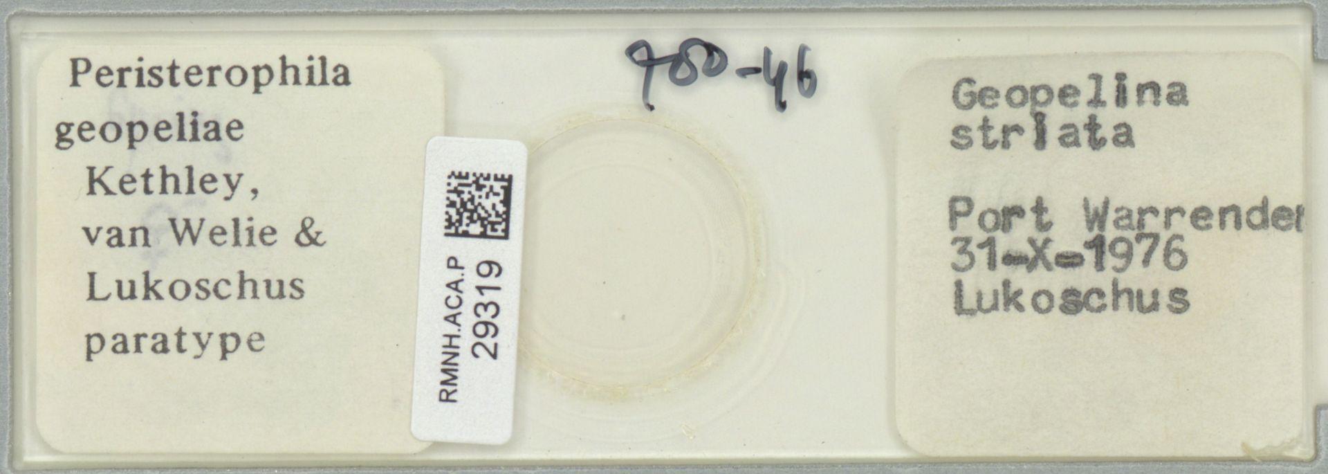 RMNH.ACA.P.29319 | Peristerophila geopeliae Kethley, van Welie & Lukoschus