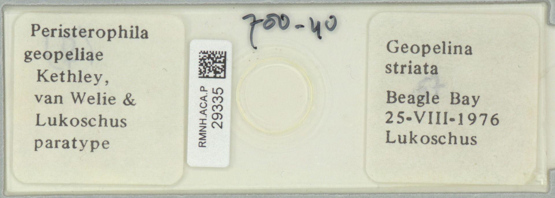 RMNH.ACA.P.29335 | Peristerophila geopeliae Kethly, van Welie & Lukoschus