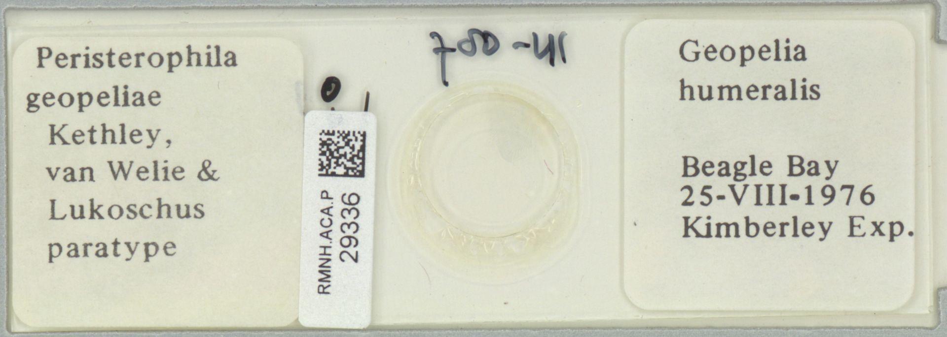 RMNH.ACA.P.29336 | Peristerophila geopeliae Kethley, van Welie & Lukoschus