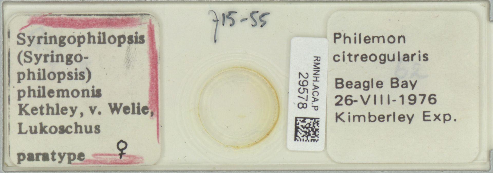 RMNH.ACA.P.29578   Syringophilopsis (Syringophilopsis) philemonis Kethley, v. Welie, Lukoschus