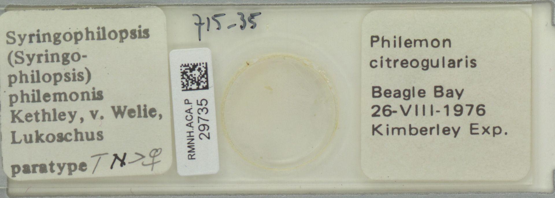 RMNH.ACA.P.29735 | Syringophilopsis (Syringophilopsis) philemonis Kethley, v. Welie, Lukoschus