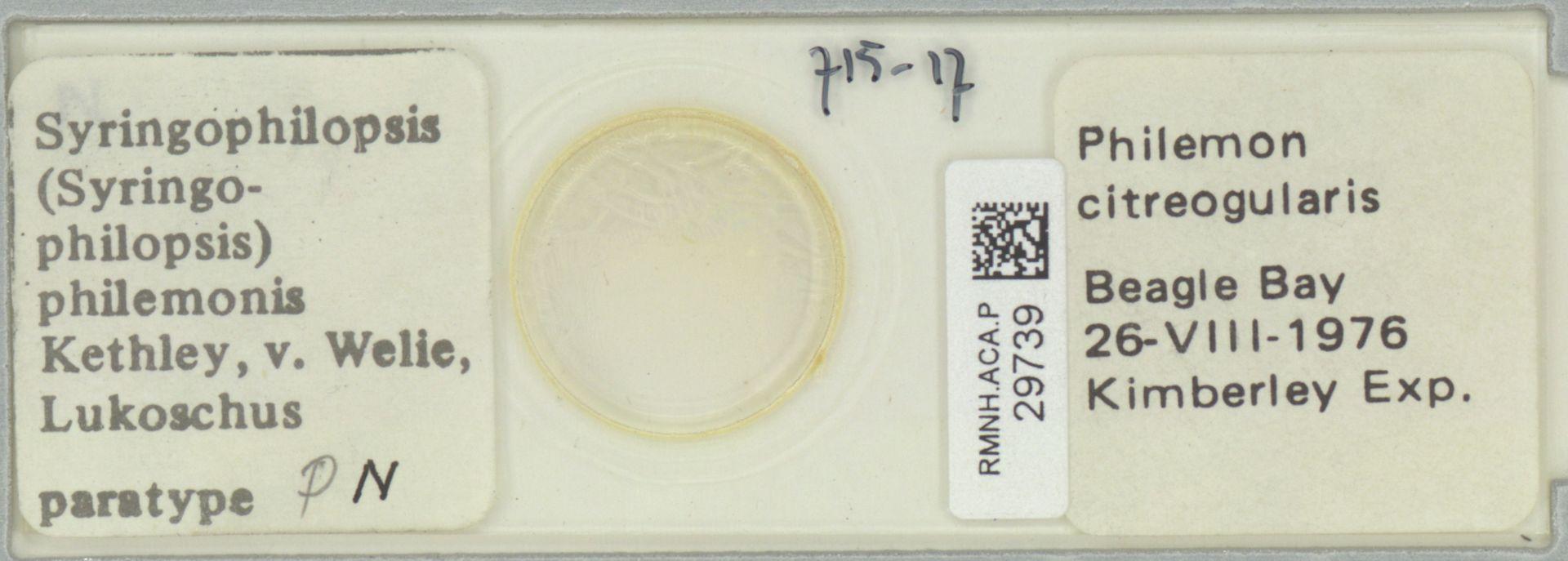 RMNH.ACA.P.29739   Syringophilopsis (Syringophilopsis) philemonis Kethley, v. Welie, Lukoschus